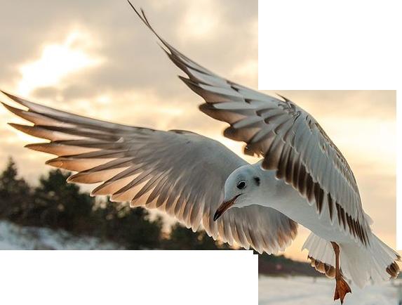 Seagull2 by alain-angela