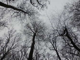 dark trees by cacharoth
