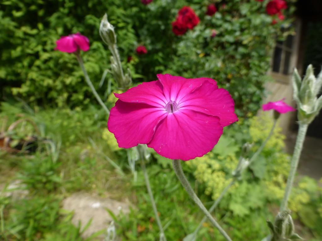 garden flower by cacharoth