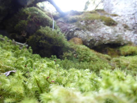 moss bed