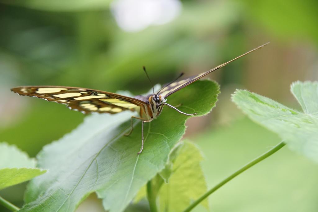 green spring friend