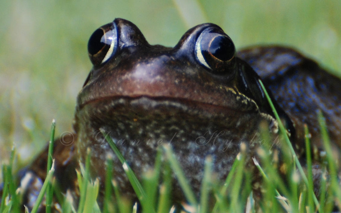 giant frog face by rabid coot on deviantart