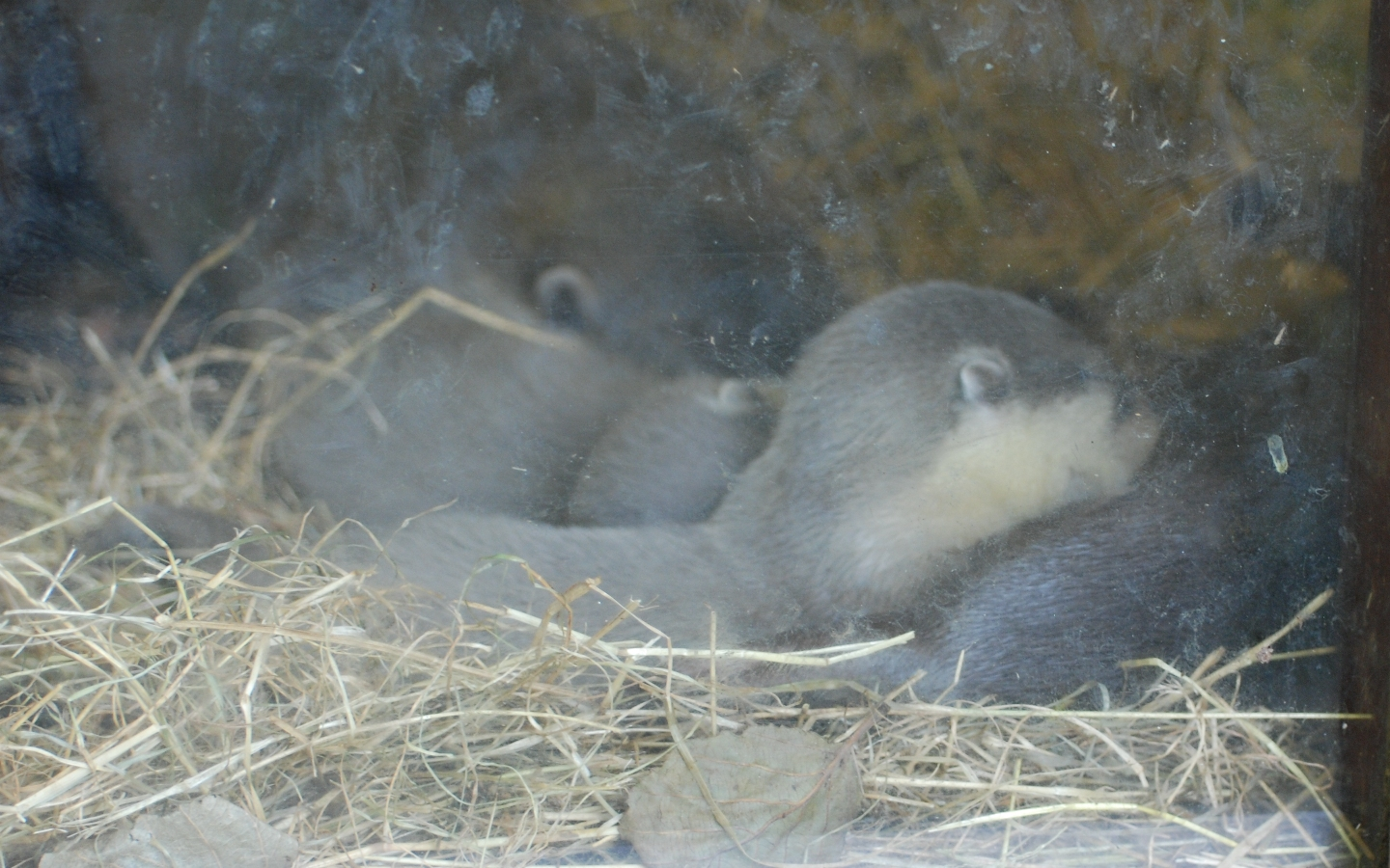 Baby Otters by Rabid-Coot