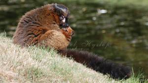 Every Lemur Is An Island. by Rabid-Coot