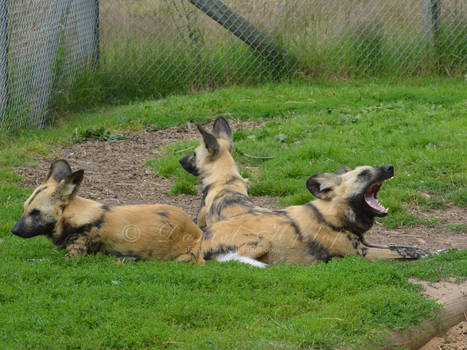3 Dog Day Afternoon.