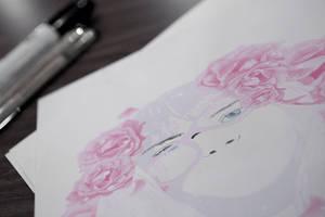 Roses close-up