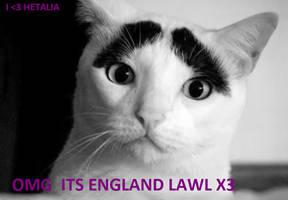 HETALIA CAT :3 by bernetwolfamber1