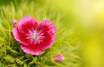 - Flower -