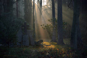 - Forest Cemetery -