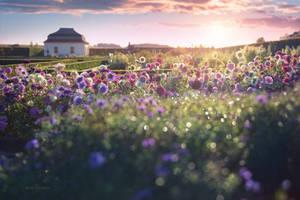 - Herbal Garden - by UNexperienced