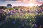 - Herbal Garden -