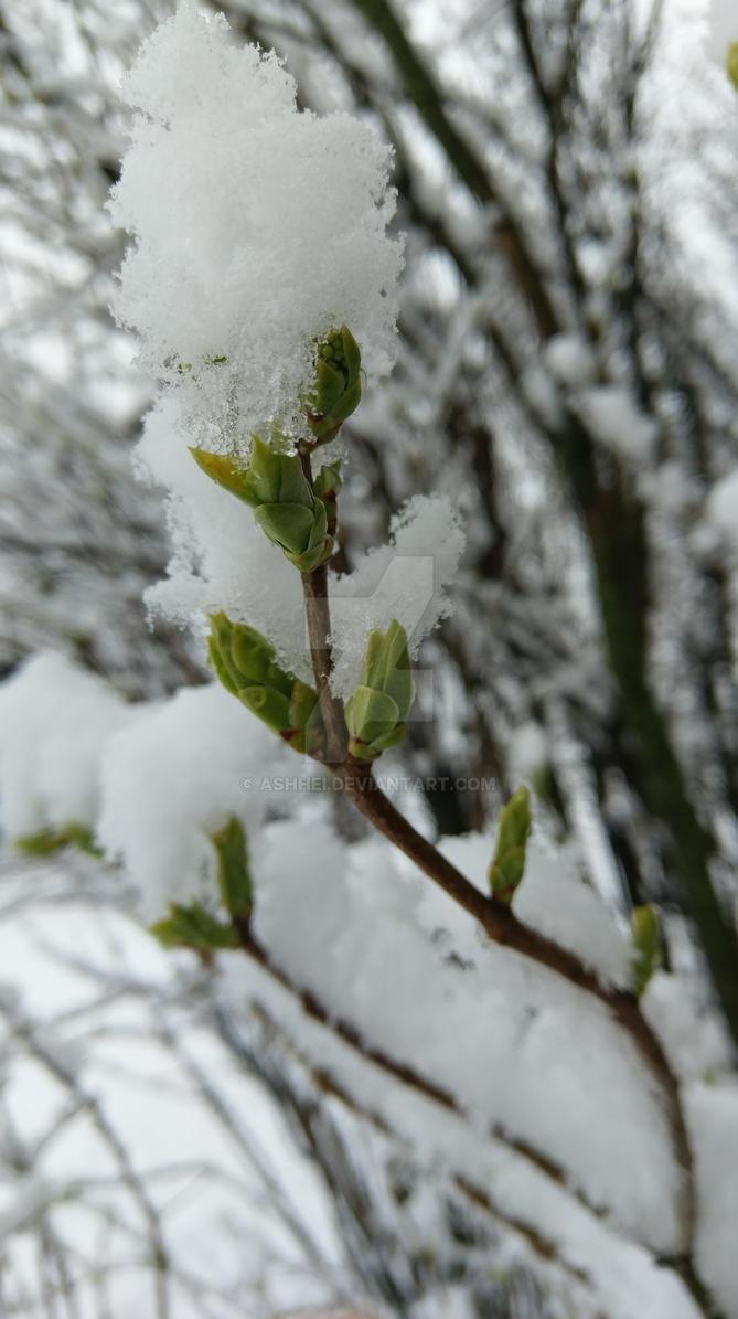 Snow by Ashhei