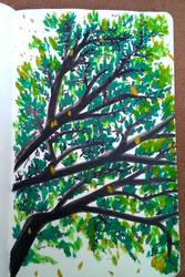Tree quick sketch by suraZcat