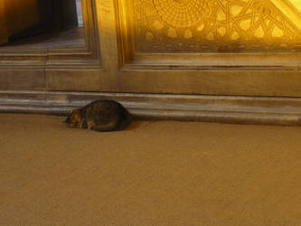 Cat in the Aya Sophia, Istanbul by HedgehogTiger