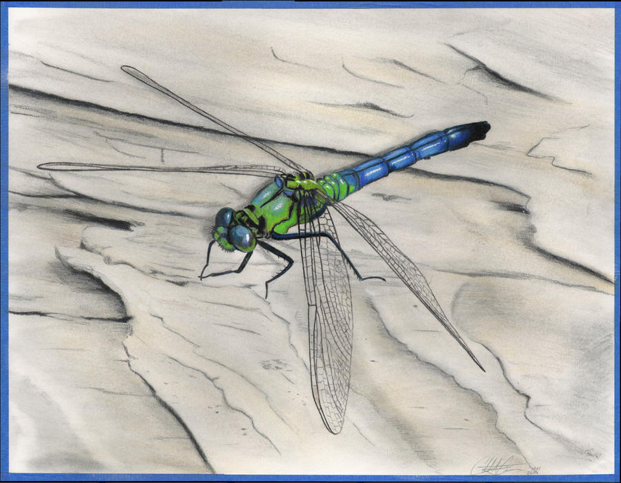 Green dragonfly pictures - photo#34