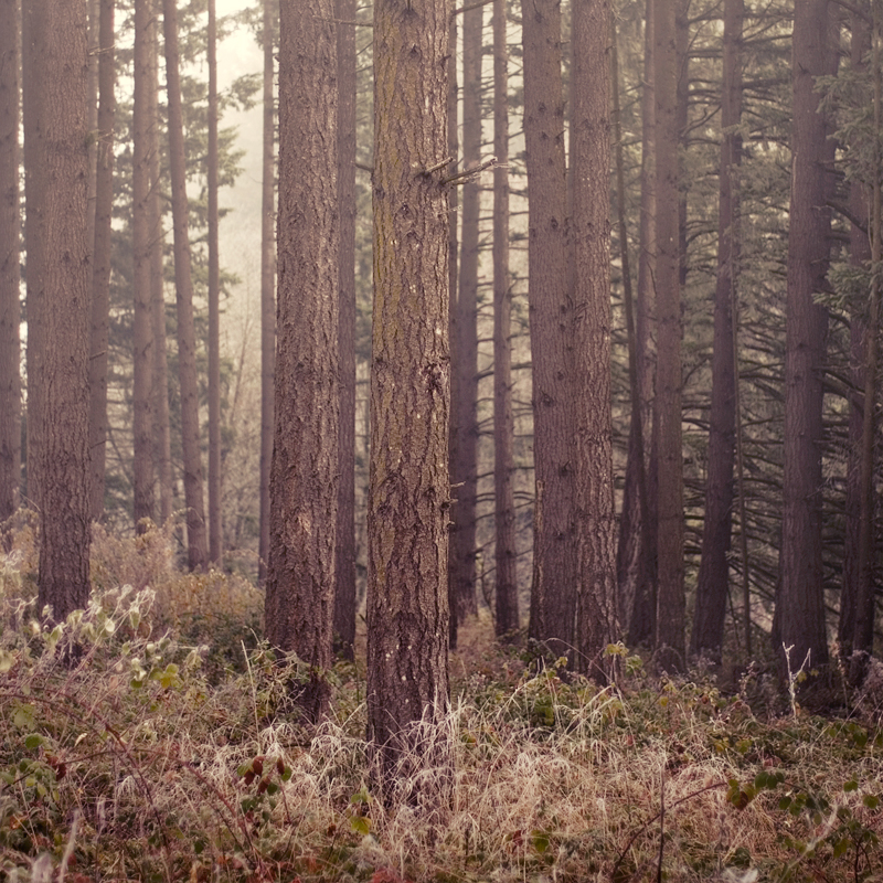 a foggy morning II by aimeelikestotakepics