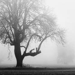 a giant in fog