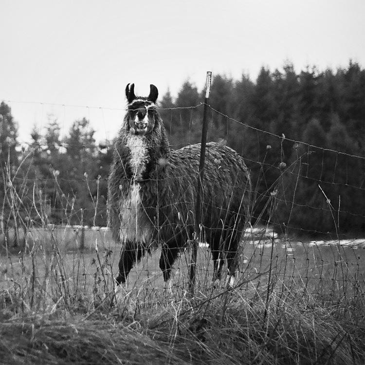 my alpaca friend II by aimeelikestotakepics