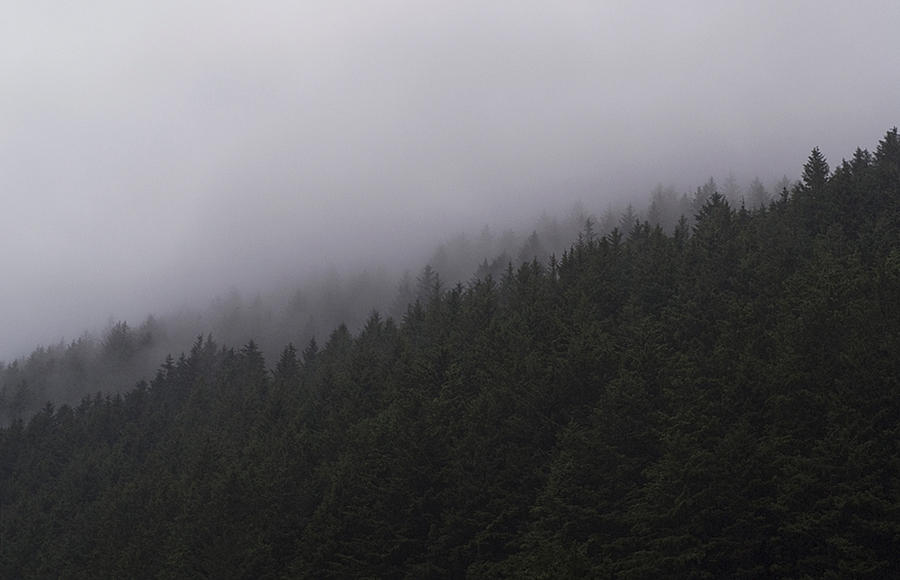 the mist by aimeelikestotakepics