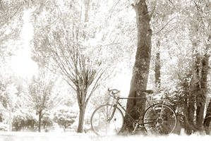 bike in wonderland by aimeelikestotakepics