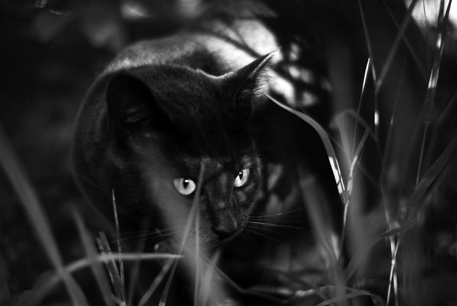 jungle cat by aimeelikestotakepics