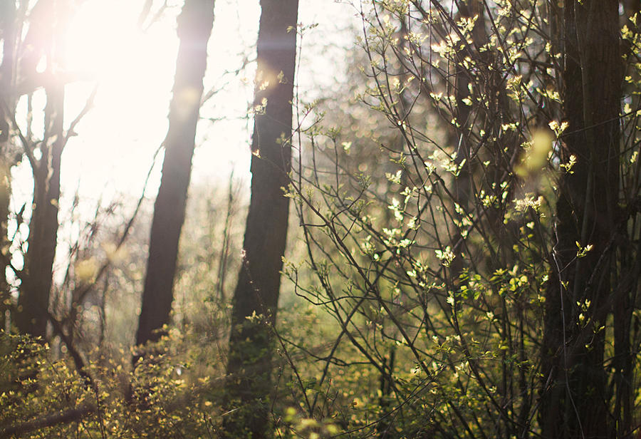 forest in spring by aimeelikestotakepics