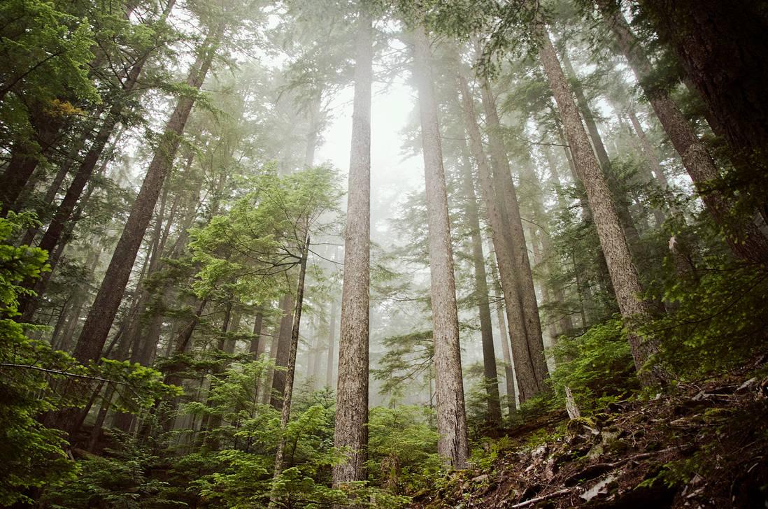 trees knees by aimeelikestotakepics