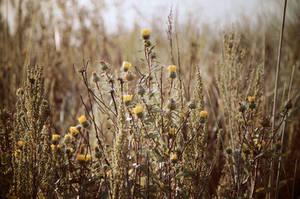 wild by aimeelikestotakepics
