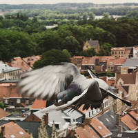 Flight in Ypres