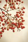 vintage berry by aimeelikestotakepics