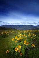 Among the Wildflowers by aimeelikestotakepics