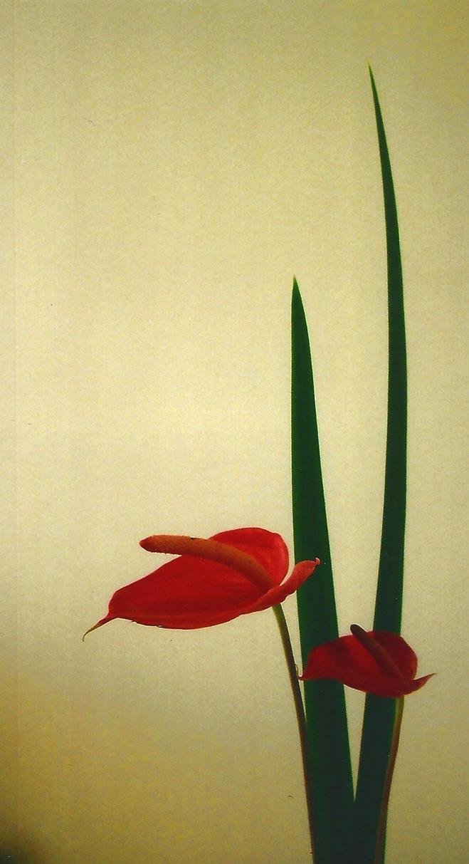 Ikebana by apocolocintos