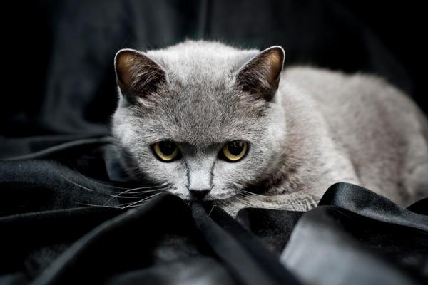 My cat by RocknRollwoman