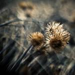 High Hopes by DominikKucera