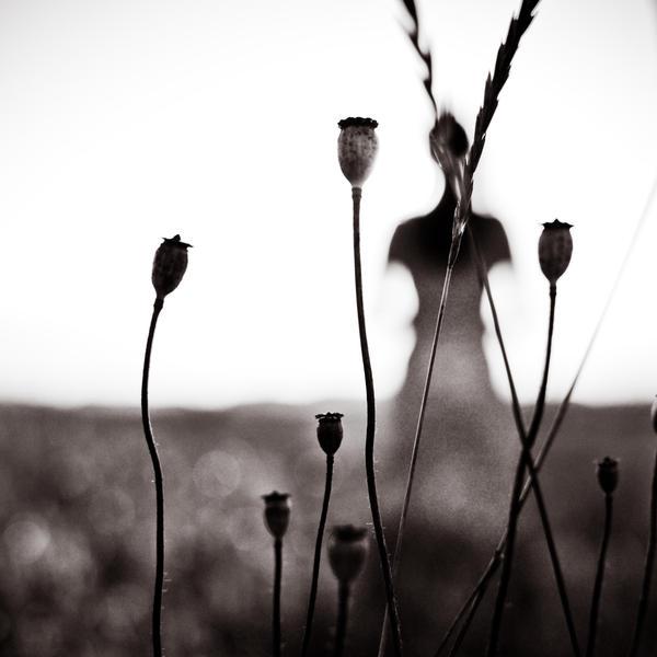 Strivers by DominikKucera