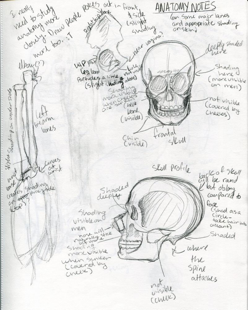 Anatomy Notes by DragonBrush95 on DeviantArt