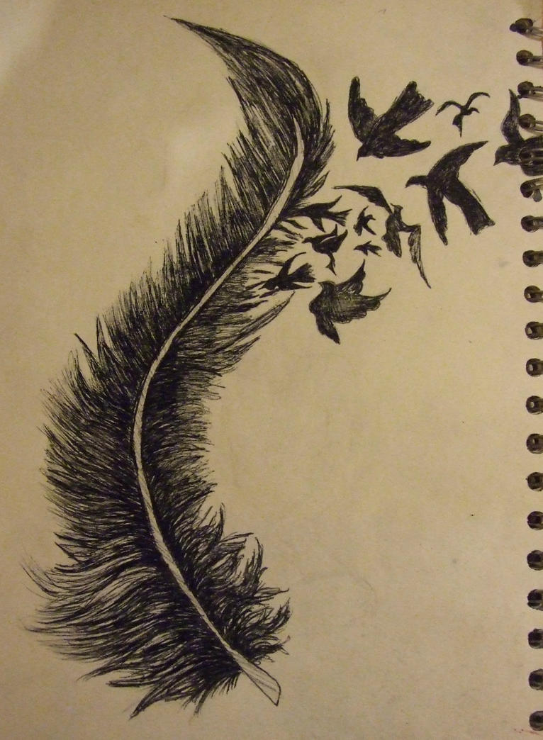 Bird Feathers Drawing