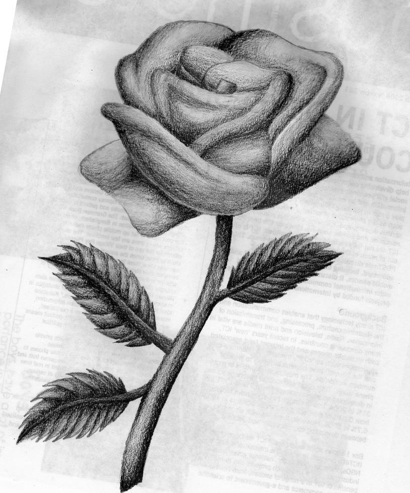 Rose by darkflower92 on DeviantArt