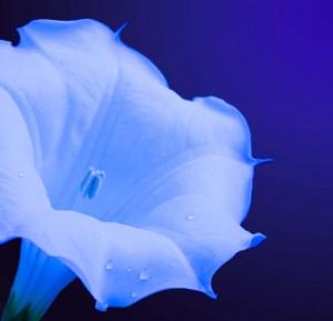 Darkest-Lunar-Flower's Profile Picture