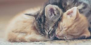 Cuddle-Kittenz's Profile Picture