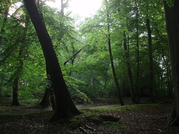 Forest by YsaeddaStock