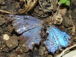 butterfly- frozen in time by acrux53