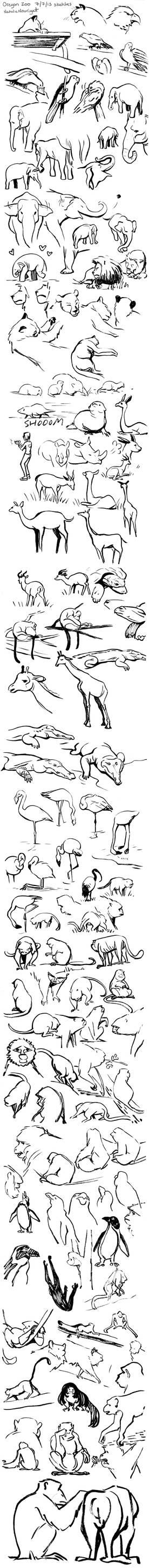 Oregon Zoo sketches 7.7.13