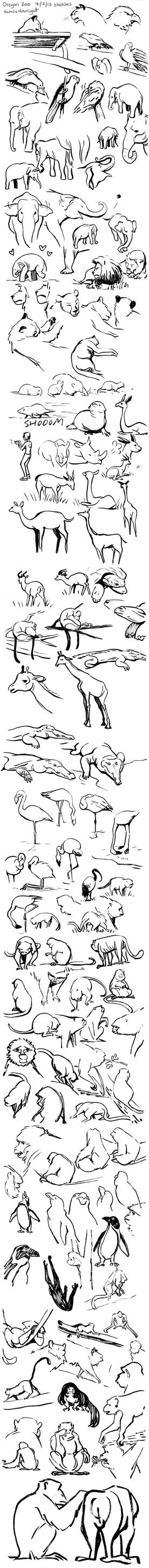 Oregon Zoo sketches 7.7.13 by Tallychyck