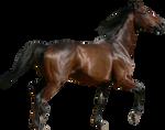 Bay pre-cut horse