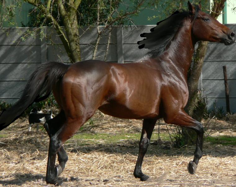 Bay pre-cut horse by TKAkingfisher