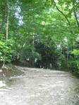 Country Path 9