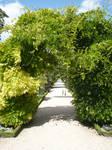 Vegetal arch