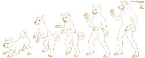 [OTS] Karate Shiba -TF Sequence by CanineHybrid