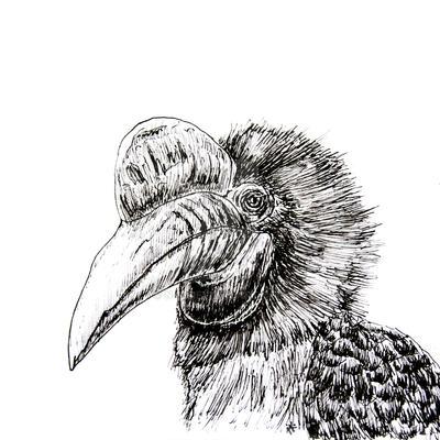 tropical bird by n-11